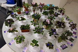 1920 X 1280 289.7 Kb 1920 X 1280 238.4 Kb 1920 X 1280 378.8 Kb 1920 X 1280 255.4 Kb 1920 X 1280 264.9 Kb Выставка-продажа редких комнатных растений в Ижевске (3-4 октября, ТЦ ФЛАГМАН).