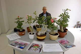 1920 X 1280 177.3 Kb Выставка-продажа редких комнатных растений в Ижевске (3-4 октября, ТЦ ФЛАГМАН).