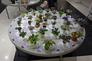 1920 X 1280 236.2 Kb 1920 X 1280 177.3 Kb Выставка-продажа редких комнатных растений в Ижевске (3-4 октября, ТЦ ФЛАГМАН).