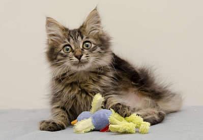 1920 X 1327 191.1 Kb Передержка для животных Пес Барбос отдает животных и пока не принимает кошек!