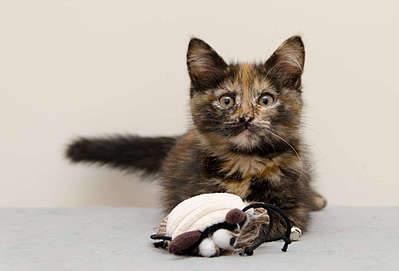 1920 X 1303 165.9 Kb 1920 X 1327 191.1 Kb Передержка для животных Пес Барбос отдает животных и пока не принимает кошек!