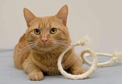 1920 X 1318 211.7 Kb Передержка для животных Пес Барбос отдает животных и пока не принимает кошек!