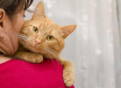 1920 X 1395 277.8 Kb 1920 X 1318 211.7 Kb Передержка для животных Пес Барбос отдает животных и пока не принимает кошек!