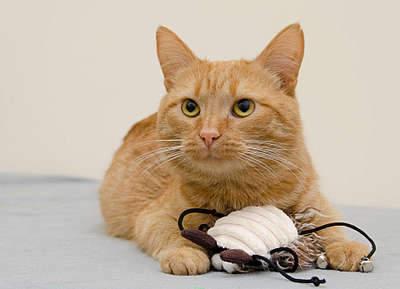 1920 X 1388 224.2 Kb 1920 X 1395 277.8 Kb 1920 X 1318 211.7 Kb Передержка для животных Пес Барбос отдает животных и пока не принимает кошек!
