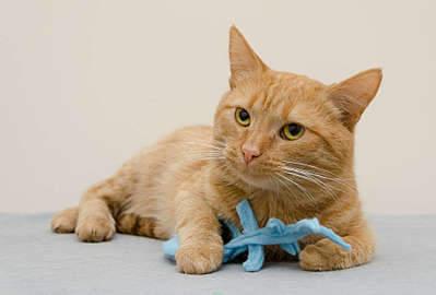 1920 X 1297 183.0 Kb 1920 X 1388 224.2 Kb 1920 X 1395 277.8 Kb 1920 X 1318 211.7 Kb Передержка для животных Пес Барбос отдает животных и пока не принимает кошек!