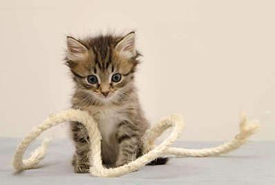 1920 X 1289 160.8 Kb Передержка для животных Пес Барбос отдает животных и пока не принимает кошек!