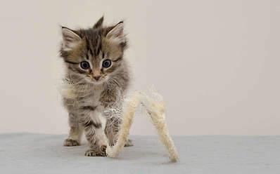 1920 X 1194 134.6 Kb 1920 X 1289 160.8 Kb Передержка для животных Пес Барбос отдает животных и пока не принимает кошек!