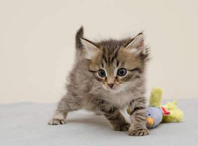 1920 X 1418 170.3 Kb 1920 X 1194 134.6 Kb 1920 X 1289 160.8 Kb Передержка для животных Пес Барбос отдает животных и пока не принимает кошек!