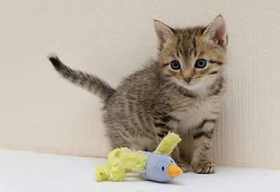 1920 X 1317 197.8 Kb 1920 X 1418 170.3 Kb 1920 X 1194 134.6 Kb 1920 X 1289 160.8 Kb Передержка для животных Пес Барбос отдает животных и пока не принимает кошек!