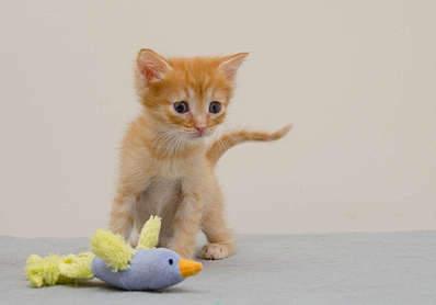 1920 X 1337 121.2 Kb Передержка для животных Пес Барбос отдает животных и пока не принимает кошек!