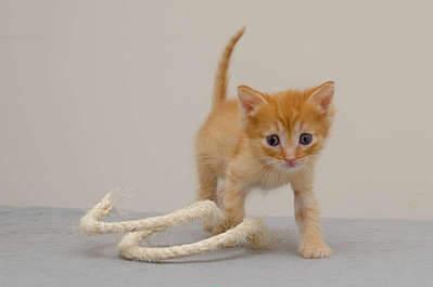 1920 X 1276 114.3 Kb 1920 X 1337 121.2 Kb Передержка для животных Пес Барбос отдает животных и пока не принимает кошек!