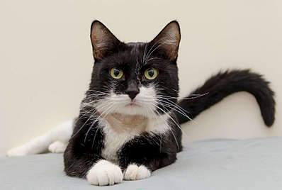 1920 X 1289 174.5 Kb 1920 X 1468 162.1 Kb Передержка для животных Пес Барбос отдает животных и пока не принимает кошек!