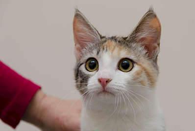1920 X 1289 145.5 Kb 1920 X 1319 120.2 Kb Передержка для животных Пес Барбос отдает животных и пока не принимает кошек!