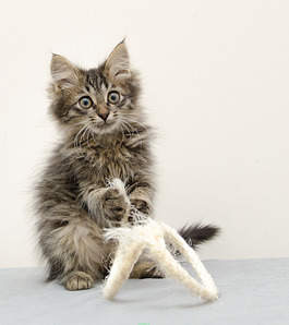 1773 X 2000 262.7 Kb Передержка для животных Пес Барбос отдает животных и пока не принимает кошек!