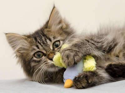 1920 X 1436 252.4 Kb 1773 X 2000 262.7 Kb Передержка для животных Пес Барбос отдает животных и пока не принимает кошек!