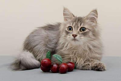 1920 X 1277 210.5 Kb Передержка для животных Пес Барбос отдает животных и пока не принимает кошек!