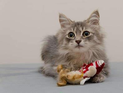 1920 X 1455 180.3 Kb 1920 X 1277 210.5 Kb Передержка для животных Пес Барбос отдает животных и пока не принимает кошек!