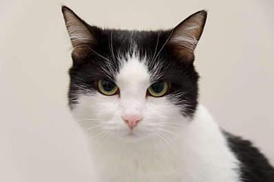 1920 X 1271 147.6 Kb Передержка для животных Пес Барбос отдает животных и пока не принимает кошек!