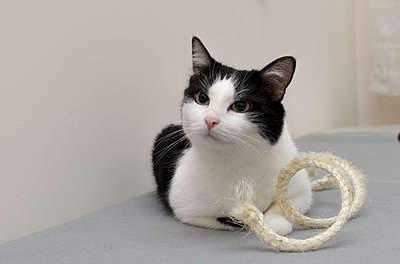 1920 X 1268 142.0 Kb 1920 X 1271 147.6 Kb Передержка для животных Пес Барбос отдает животных и пока не принимает кошек!