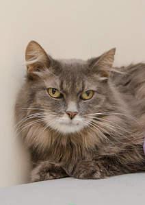 1419 X 2000 285.0 Kb Передержка для животных Пес Барбос отдает животных и пока не принимает кошек!