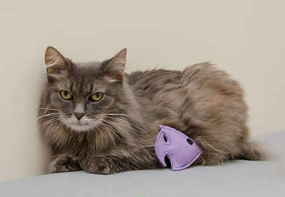 1920 X 1328 196.0 Kb 1419 X 2000 285.0 Kb Передержка для животных Пес Барбос отдает животных и пока не принимает кошек!