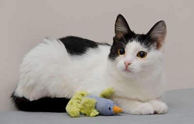 1920 X 1227 134.5 Kb 1920 X 1404 181.2 Kb Передержка для животных Пес Барбос отдает животных и пока не принимает кошек!