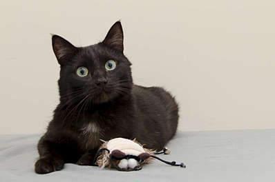 1920 X 1269 117.8 Kb 1920 X 1362 164.2 Kb Передержка для животных Пес Барбос отдает животных и пока не принимает кошек!