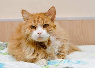 1920 X 1365 224.4 Kb Передержка для животных Пес Барбос отдает животных и пока не принимает кошек!