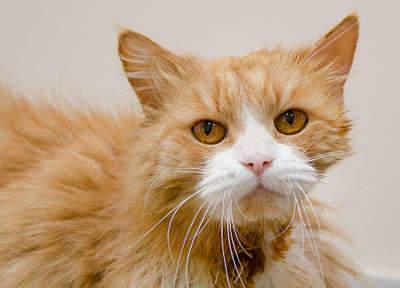 1920 X 1384 240.1 Kb 1920 X 1365 224.4 Kb Передержка для животных Пес Барбос отдает животных и пока не принимает кошек!