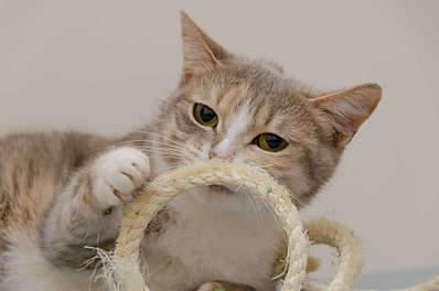1920 X 1271 164.7 Kb Передержка для животных Пес Барбос отдает животных и пока не принимает кошек!