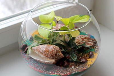 800 X 533 142.3 Kb 558 X 600 129.7 Kb 'Сад в стекле'. Композиции из растений.