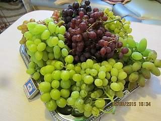 800 X 600 183.1 Kb Саженцы винограда. Продам.