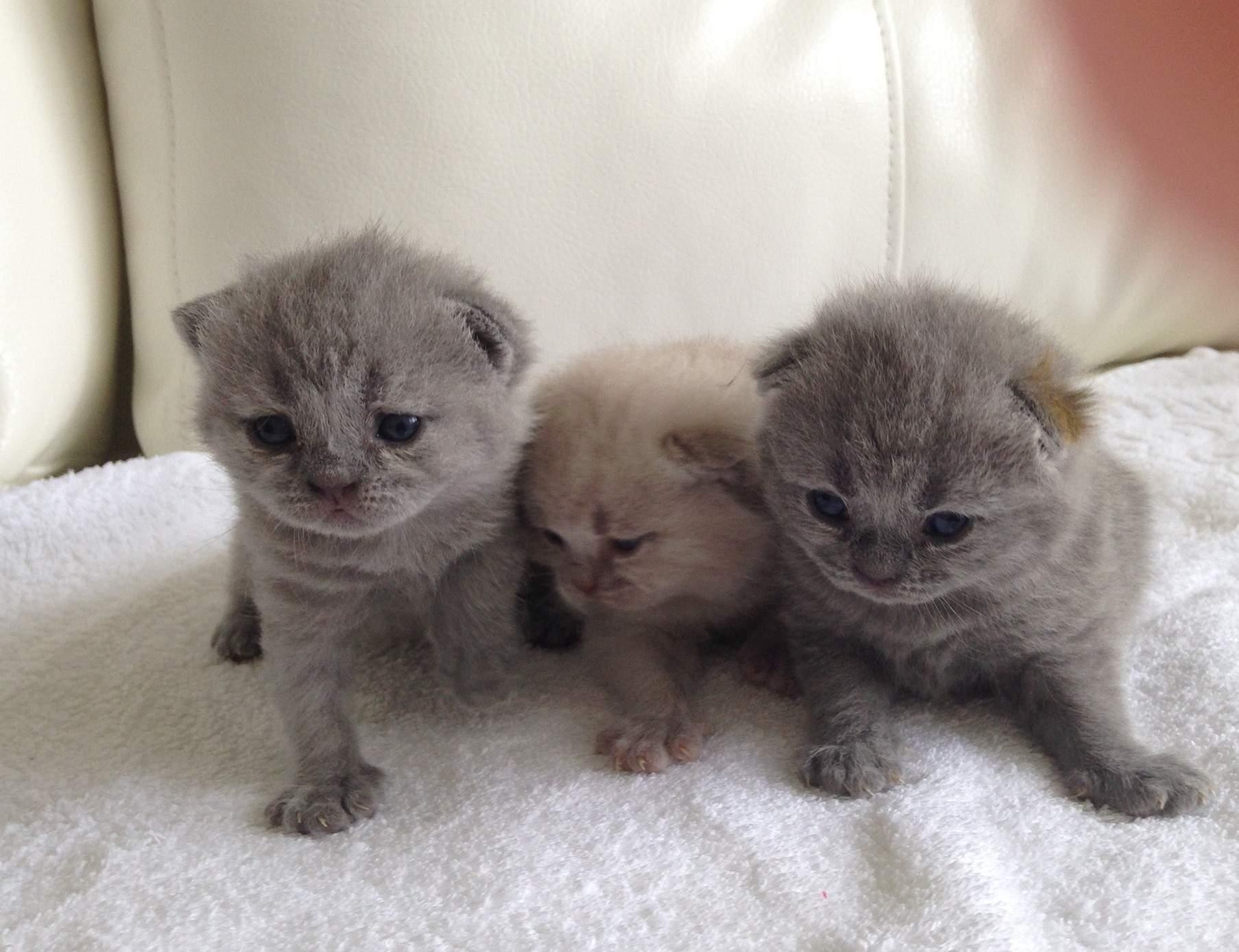 картинки какие котята бывают маслу