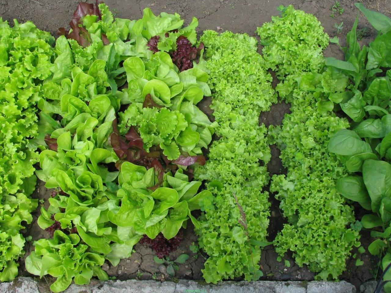 ингредиенты салаты огород фото озер омской области