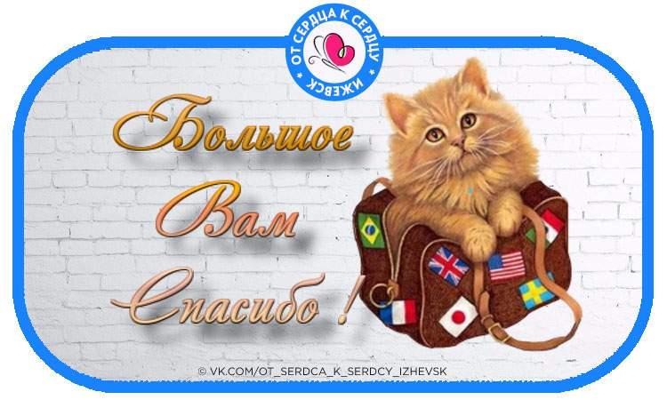 Спасибо открытки с котами, именем