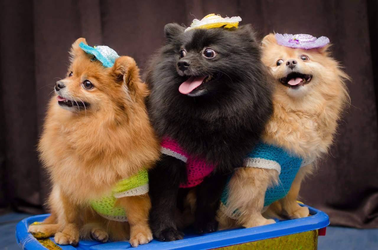 обычно цирк собаки фото идет активная подготовка