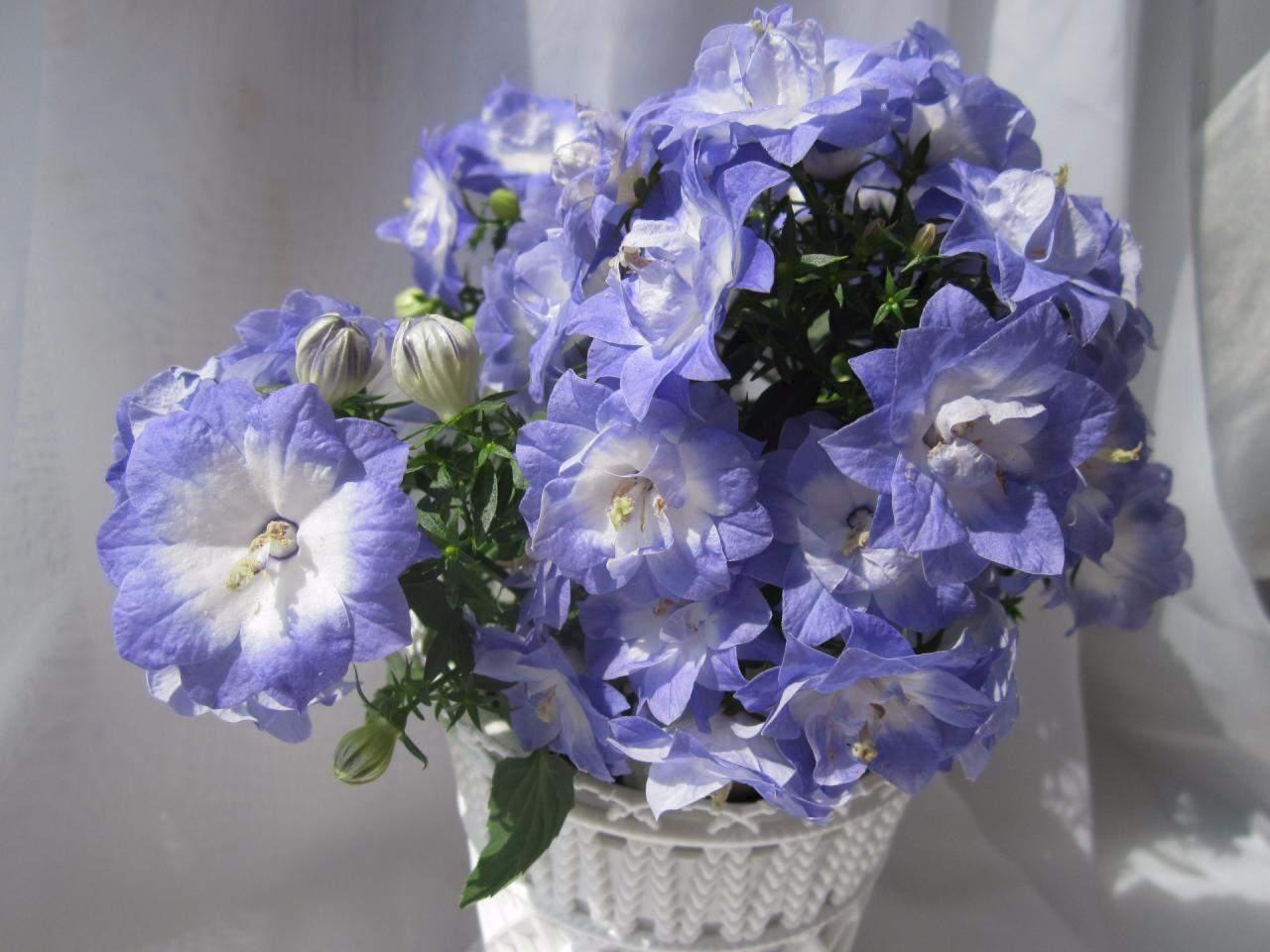 Цветы жених купить
