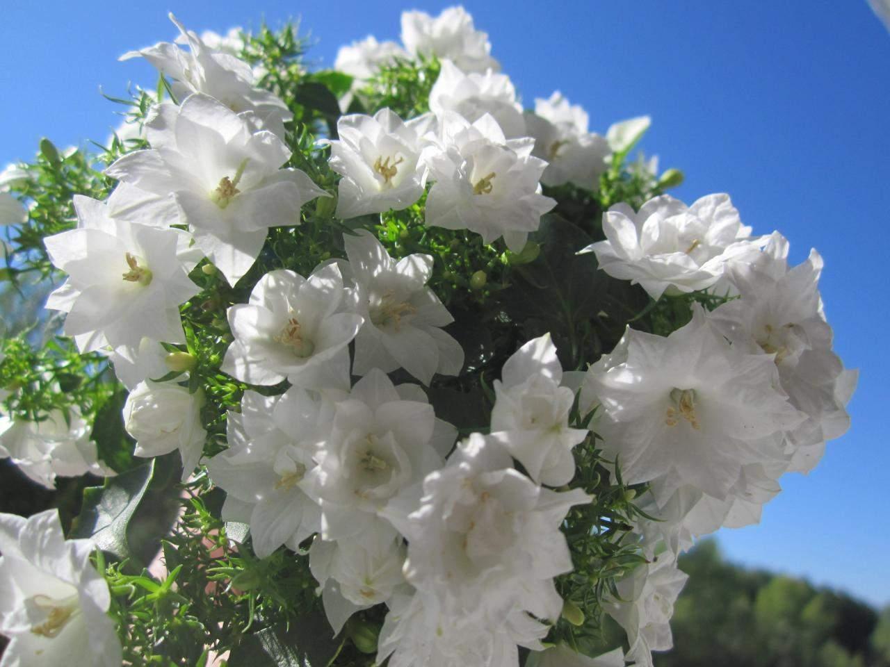 Луковицы садовых цветов фото и названия предстоит отправиться